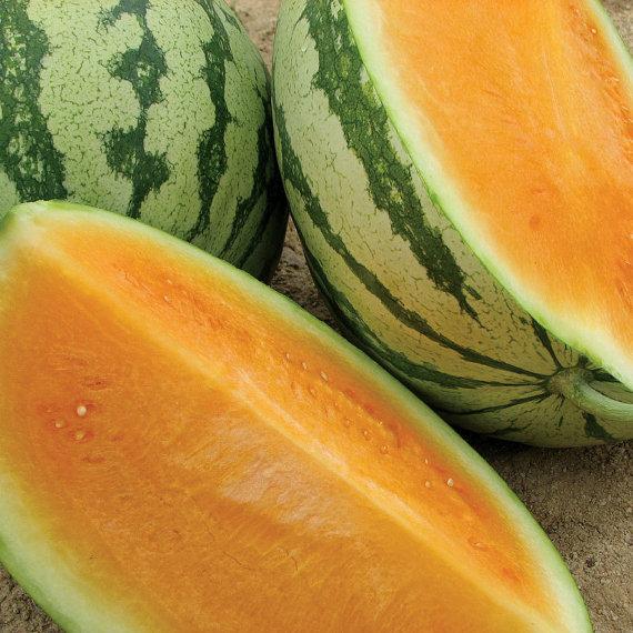 แตงโมเทนเดอร์สวีทสีส้ม - Tender Sweet Orange Watermelon