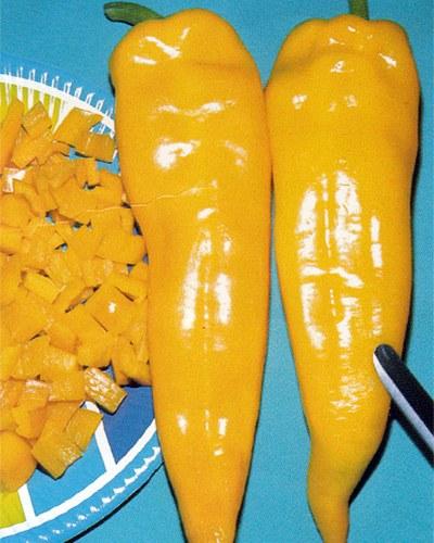 พริกหวานเขากระทิงสีเหลือง - Yellow Bulls Horn Pepper