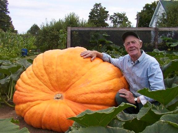 ฟักทองยักษ์ดิลแอทแลนติก - Dill Atlantic Giant Pumpkin