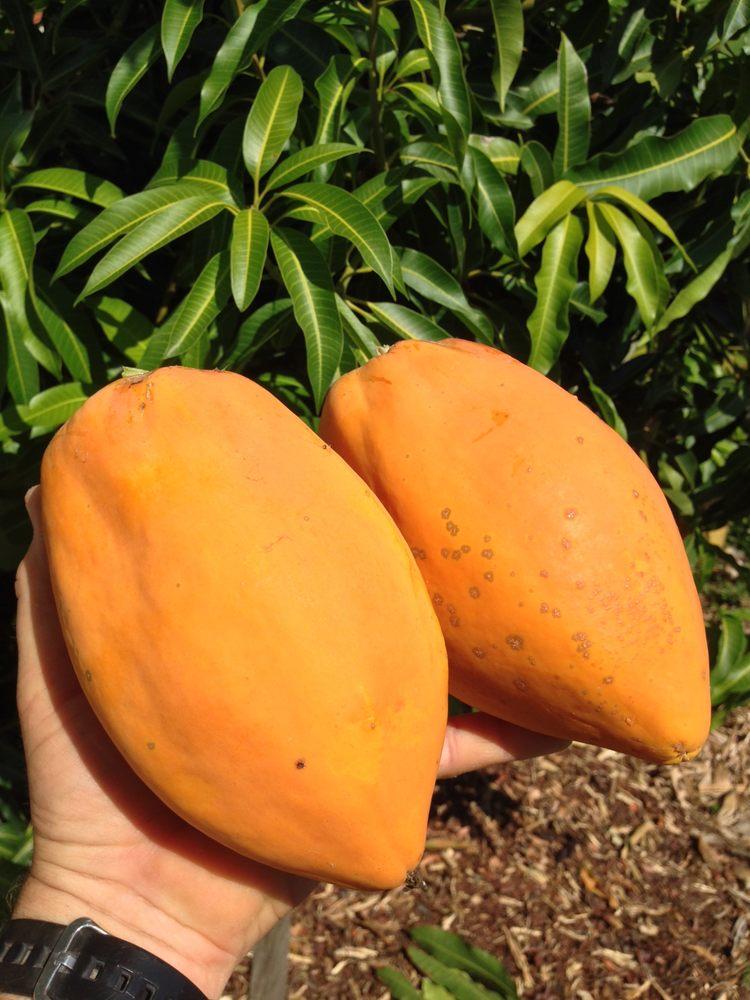 มะละกอแอฟริกาสีทอง - African Gold Papaya