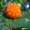 แซลม่อนเบอรี่ - Salmonberry