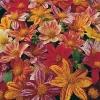 รักเร่เออลี่เบิร์ดคละสี - Mixed Early Bird Dahlia