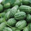 แตงกวาเม็กซิกัน - Mexican Sour Gherkin