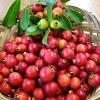 ฝรั่งสตรอเบอรี่สีแดง - Red Strawberry Guava