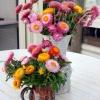 ดอกกระดาษคละสี - Mixed Strawflower