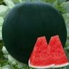 แตงโมไร้เมล็ดแบล็ค - Black Seedless Watermelon
