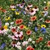 ดอกไม้ป่าคละพันธุ์ - Mixed Wildflower