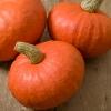 ฟักทองญี่ปุ่นสีส้ม F1 - Red chesnut Japanese Pumpkin F1