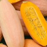 ฟักทองกล้วยสีชมพู - Pink Banana Squash
