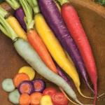 แครอทคละสี - Mixed Rainbow Carrot
