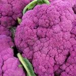 กะหล่ำดอกสีม่วง - Purple Cape Cauliflower
