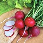 แรดิชเชอรี่เบลล์ - Cherry Belle Radish