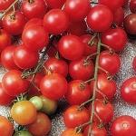 มะเขือเทศชูการ์สแน็ค - Sugar Snack Tomato