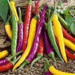 พริกคาเยนคละสี - Mixed Cayenne Pepper ซองดั้งเดิม