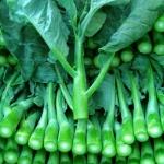 คะน้า - Chinese Kale