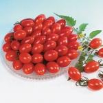 มะเขือเทศชูการี่ F1 - Sugary Tomato F1