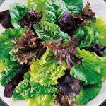 ผักสลัดเมชคลันช์คละชนิด - Mesclun Lettuce