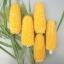 ข้าวโพดป๊อปคอร์นสับปะรดสีเหลือง - Pineapple Popcorn (หายากกว่าสีแดง) thumbnail 3