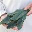 เคลเนโรดิทอสคาน่า - Nero di Toscana Kale thumbnail 3