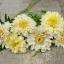 ดาวเรืองสีขาว - White African Marigold thumbnail 3