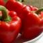 พริกหวานสีแดง - Yolo Wonder L Pepper thumbnail 2