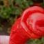 พริกกระจู๋สีแดง - Red Peter Pepper thumbnail 2