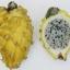 กิ่งแก้วมังกรเวียดนามสีเหลือง - Hylocereus megalanthus thumbnail 1