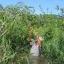 คามู คามู - Camu Camu (Myrciaria dubia) วิตามินซีสูง thumbnail 3