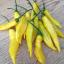 พริกเลม่อนดรอป - Lemon Drop Pepper (เปรี้ยว) thumbnail 3