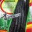ข้าวโพดสีดำ - ฺBlack Corn thumbnail 1