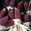 ข้าวโพดป๊อปคอร์นสตรอเบอรี่สีแดง - Red Strawberry Popcorn thumbnail 1