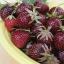 สตรอเบอรี่เพอเพิ้ลวันเดอร์ - Purple Wonder Strawberry thumbnail 1