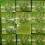 สบู่โสมมะนาว (Ginseng Lemon Soap By Jeezz) thumbnail 12