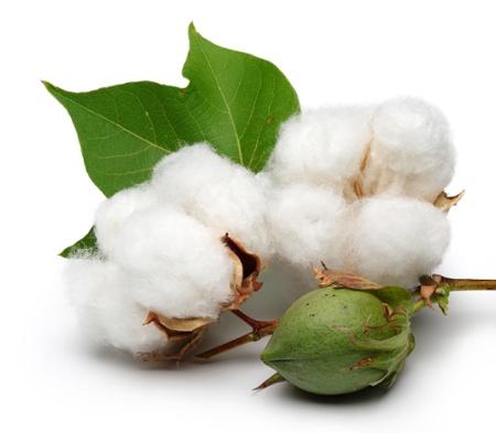 samson hair fiber ผลิตมาจากฝ้ายสายพันธุ์โมร็อคโค ทำให้ยึดเกาะได้ดี