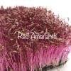 Amaranth microgreen เมล็ดผักโขมเเดง