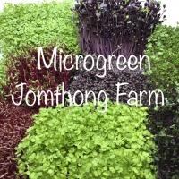 เมล็ดไมโครกรีน ผักไมโครกรีน Microgreen Seed