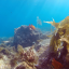 GOPRO HERO4 SESSION RED SNORKEL FILTER thumbnail 3