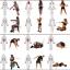 ขาย Fitness Resistance Band MAXXFiT ขายยางยืดออกกำลังกาย thumbnail 15