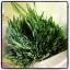 เมล็ดข้าวสาลี, ข้าวสาลี, wheatgrass seed thumbnail 7