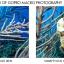 Macromate Mini Macro Lens มาโครใช้ถ่ายวีดีโอระยะใกล้ใต้น้ำ สำหรับกล้อง GoPro Hero4, Hero3+ & Hero3 หน้า 55mm thumbnail 5